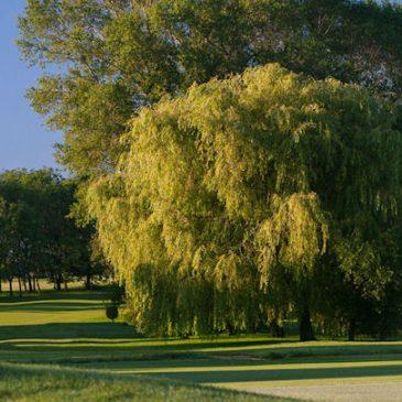North Oxford Golf Club